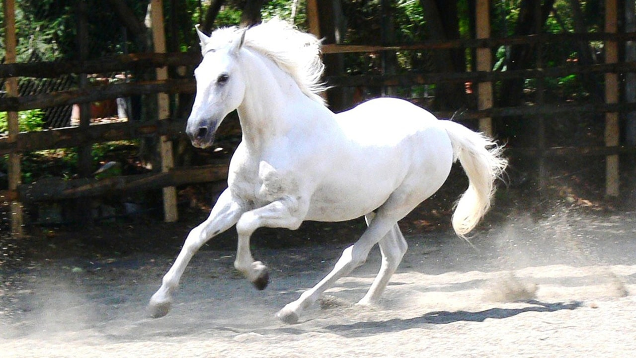 Ngựa biểu tượng của sức mạnh, quyền uy, may mắn và tài lộc