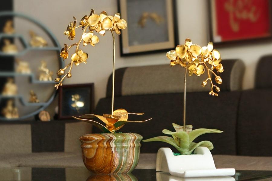 Hoa lan mạ vàng là điểm nhấn sang trọng trong văn phòng hoặc phòng khách