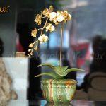 Hoa lan mạ vàng phiên bản